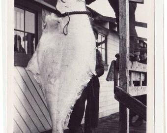 Fish Real Photo Postcard BIG Fish RPPC 1953 Alaska Fish