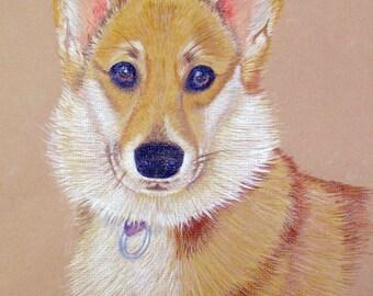 Pembroke Welsh Corgi. Personalized Animal Portraits, colored pencil, Pet Portrait colored pencil from photo