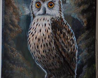 Owl at night