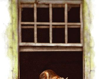 Red Fox in a Window, Fox Photo, Wildlife Photography, Abandoned House, Nature, Idaho, Unusual Wildlife Photo, Animal, Red Fox Photography