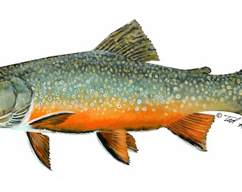 "7"" Vinyl Decal, Brook Trout,"