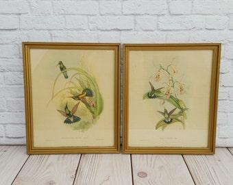 Vintage Hummingbird Prints in Wood Frames Set of 2 IB Fischer Co