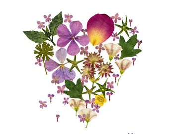 Flower heart poster, Herbarium pressed flower illustration, Botanical art print, Love heart illustration, Romantic home decor, Nursery room