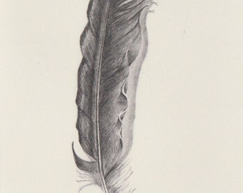 Original pencil drawing ~ soft feather