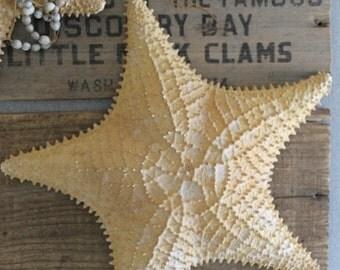 Vintage Large 11 1/2 Inch Natural Starfish Specimen Display