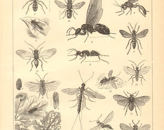 1895 Original Antique Engraving of Insects, Bees, Wasps, Ants, Flies, Antlions and Fleas