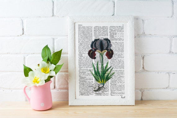 Vintage Book Print Dictionary or Encyclopedia Page Print- Book Iris Plant Botanical studio print on Dictionary BFL067