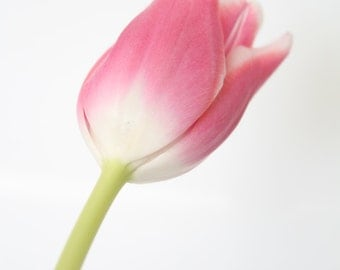 Flower Photography, Pink Tulip, Flower Photo, Fine Art Print, Pink Flower, Floral Photography, Close Up, Studio