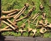 Aged Cat Bones