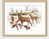 Deer Art Print w/Mat -- Vintage Matted Animal Artwork