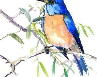 Eastern Bluebird, Original watercolor painting, Bird watching, bird watching gift birds