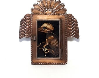 real mummified fetal pig taxidermy specimen shadowbox