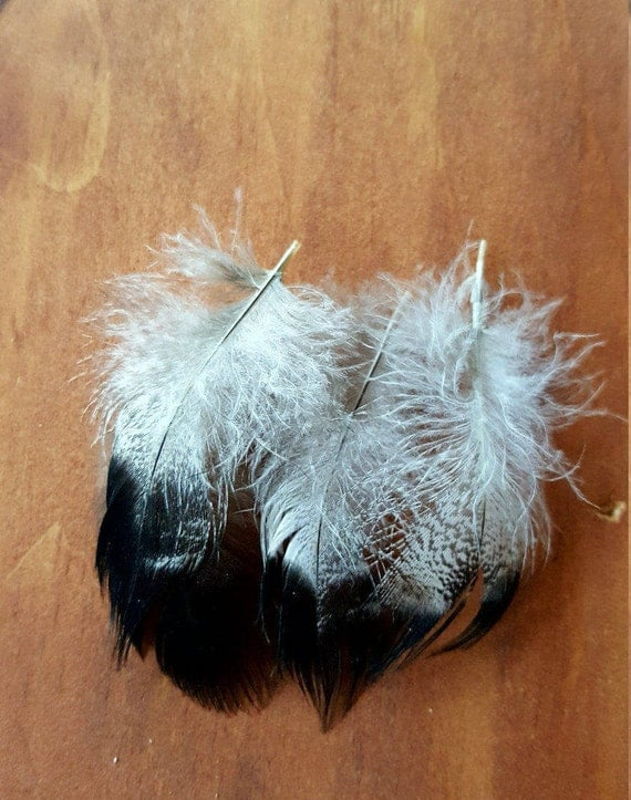 Unique Stunning Duck Feathers Cruelty Free Humane