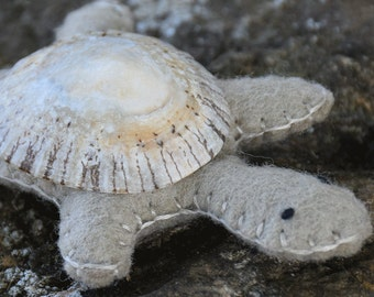 Light Tan Turtle