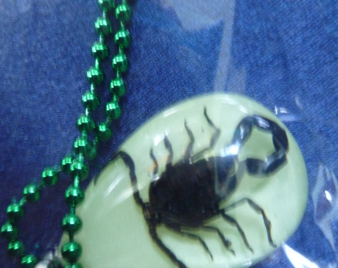 Scorpion Real Scorpions in Lucite your choice Amber Blue Black or Glow in the Dark and your choice of necklace