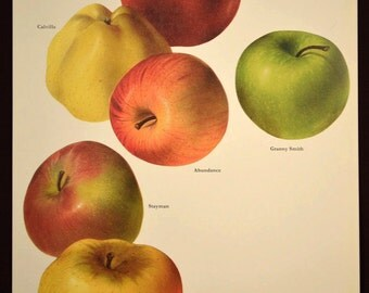 Apples Wall Art Decor Fruit Wall Art Kitchen Decor Apple