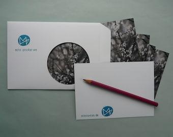 Hawthorn, eight postcards, postcards, set, minnievoss, analog photography, offset printing, postcard, postcard, whitethorn, spring, spring