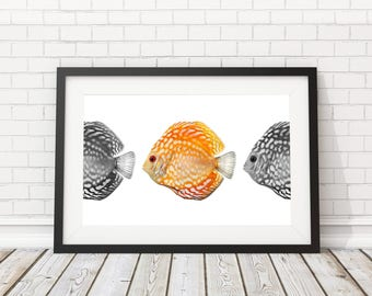 Fish Printable, Sealife poster, Fish wall art, Nautical print, Coastal art, Beach Poster, Nautical Art, Beach decor, Bathroom Art, Fish Deco