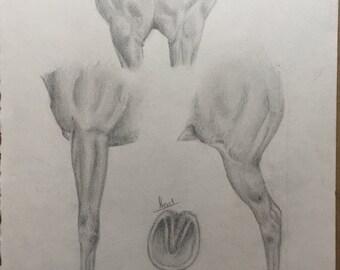 Sketchbook Studies of Horse Body