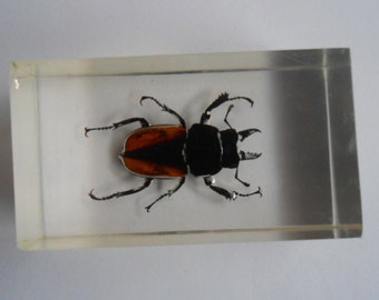 Vintage paperweight resin block with real bug, Beetle Resin Souvenir, Bugs taxidermy, insect taxidermy, natural history specimen