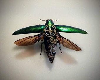 Entomology insect steampunk mechanical beetle