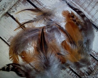 Rooster Feathers Natural, Feathers Eggshell