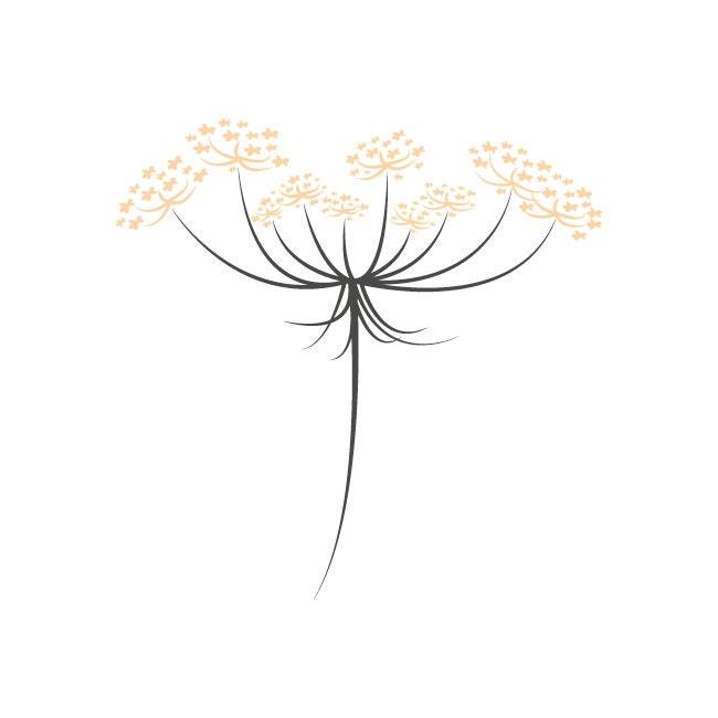 fleurdecarotte