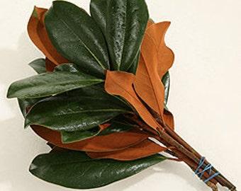 Fresh Magnolia, Magnolia bundle, Magnolia Bunch,  for Crafting, Magnolia Leaf, Magnolia Leaves, Magnolia Twigs, Magnolia Limb, Magnolia Bulk