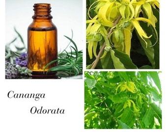 Cananga Odorata Essential Oil, Cananga Essential Oil, Cananga Odorata Flower Oil, 100% Pure Authentic Cananga Odorata EO
