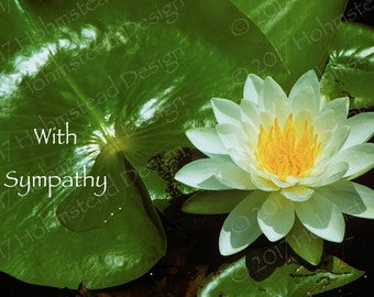 Sympathy: Lily Pad and Flower
