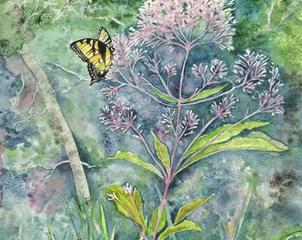 Joe Pye Weed , watercolor giclee print 9 by 12 inches