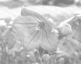 Black and White Flower Photograph