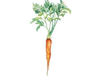 Carrot - Art Print