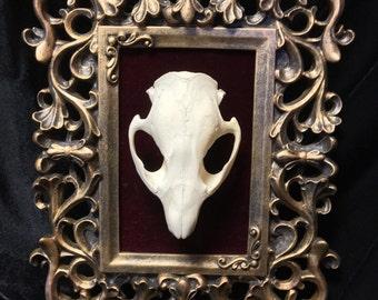 Beaver Skull and Frame - 4x6 Opening
