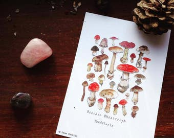 Woodland Series: Irish Toadstools A6 Illustration Print