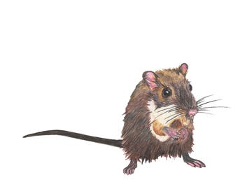 Mouse Print from an Original Color Pencil Drawing by Kenley Jones