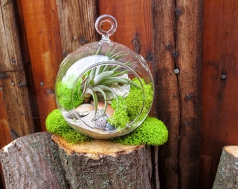 Ocean Air Plant Terrarium Kit / DIY Hanging Glass Tillandsia Terrarium