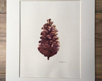 Pine cone-original watercolor painting