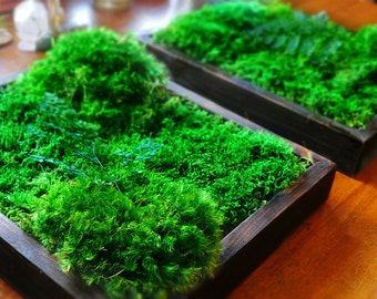 """14x12"""" Moss Wall Art. Real preserved green wall. Real preserved moss and ferns. Zero care moss art."""