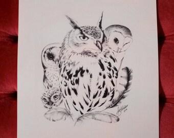 Wise Birds Montage