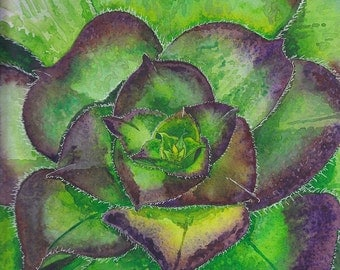 Succulent Rosette (Archival-Quality Watercolor Print with White Matting)