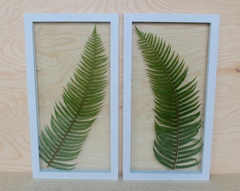 Framed Fern Botanical Art | Northwest Home Decor | Gallery Wall Frame Set | Jungalow Style Art | Green Boho Decor | Framed Pressed Plants