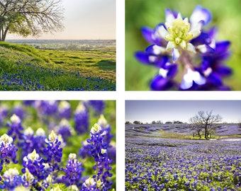 "Texas Bluebonnets Print Set | ""Bluebonnet Fields""  | Texas Wildflowers Wall Art | Four Photo Set - Bluebonnets Set - Bluebonnets Gift"