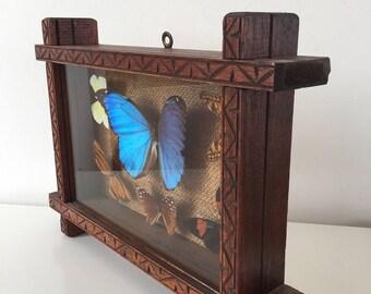 Cadre avec papillons