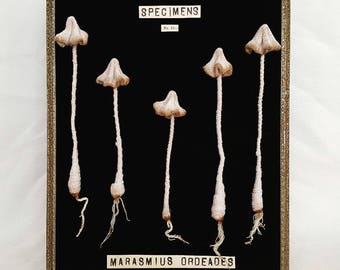 Fairy ring mushrooms botanical chart ,art frame textile mushroom sculpture