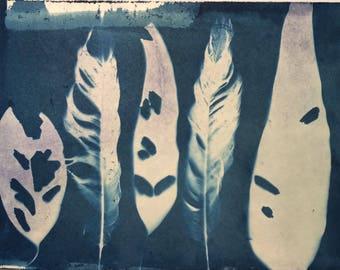 Cyanotype Print - Ghost Leaves I