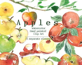 Apple clip art, Apple tree branch, Printable apples, Watercolor botanical clipart, Apple pieces illustration, Green apple, Fruit clip art