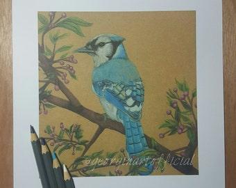 Blue Jay - Art Print