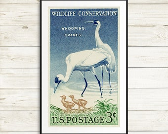 Whooping cranes, whooping crane, bird art, bird posters, wildlife conservation, bird watching, endangered species, conservation posters