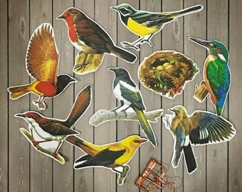 The Vintage Birds Collection Series 1 (Large & Small)